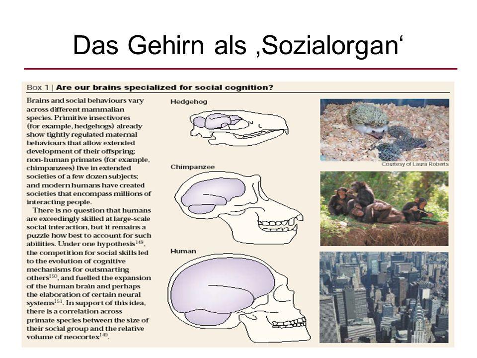Das Gehirn als 'Sozialorgan'
