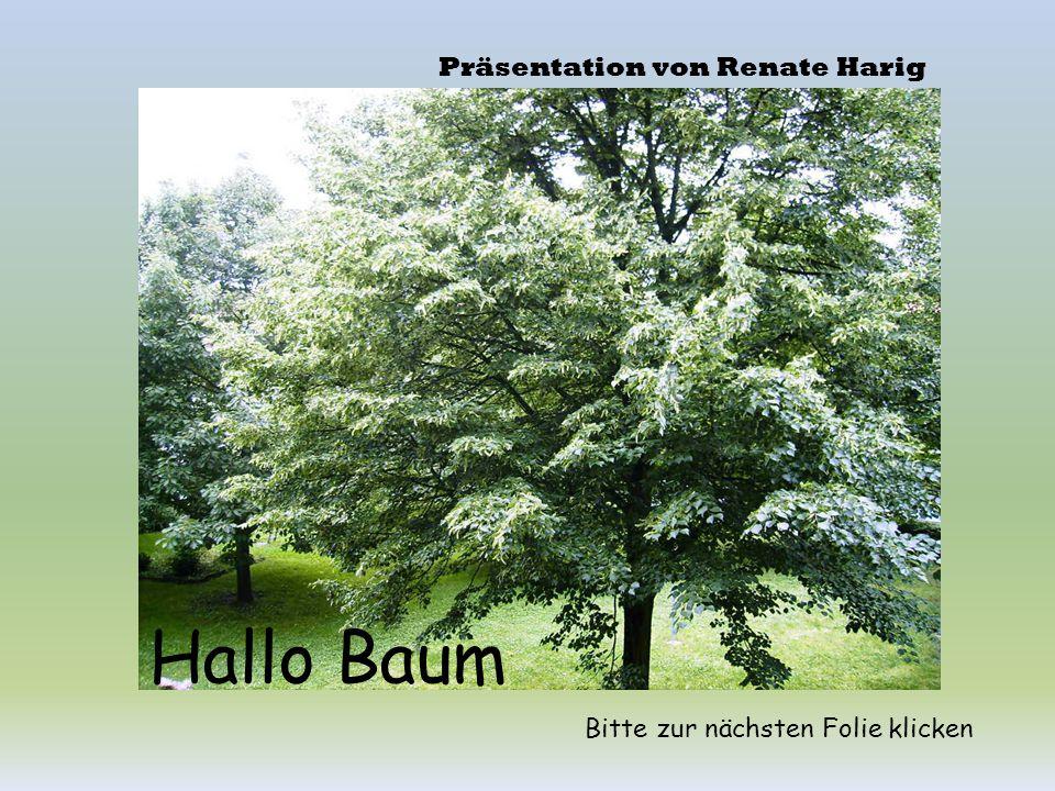 Hallo Baum Präsentation von Renate Harig