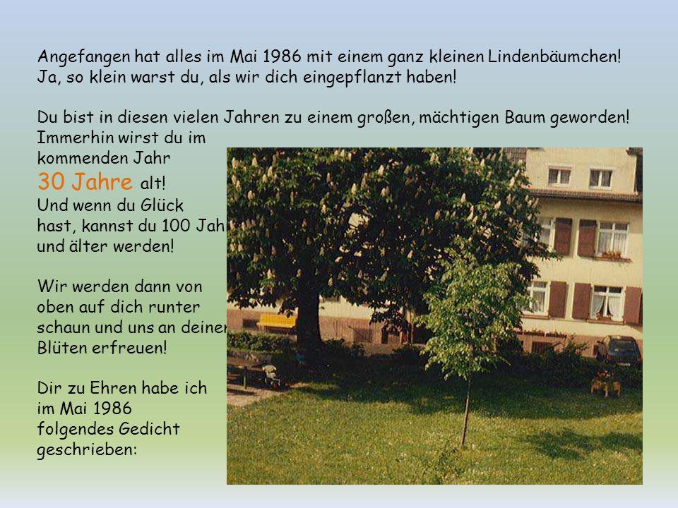 Angefangen hat alles im Mai 1986 mit einem ganz kleinen Lindenbäumchen!