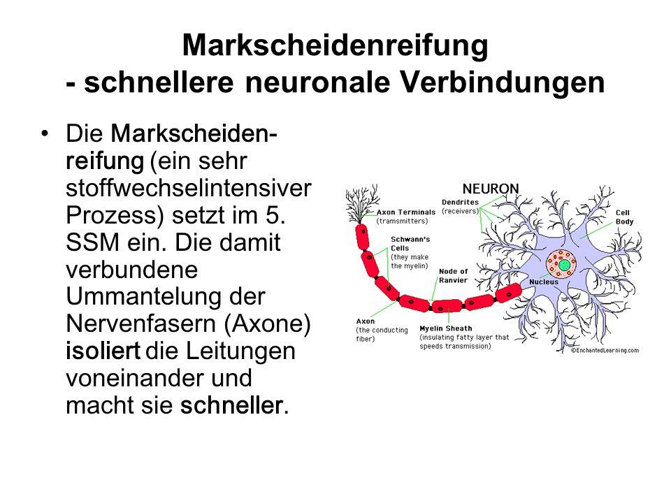 Markscheidenreifung - schnellere neuronale Verbindungen