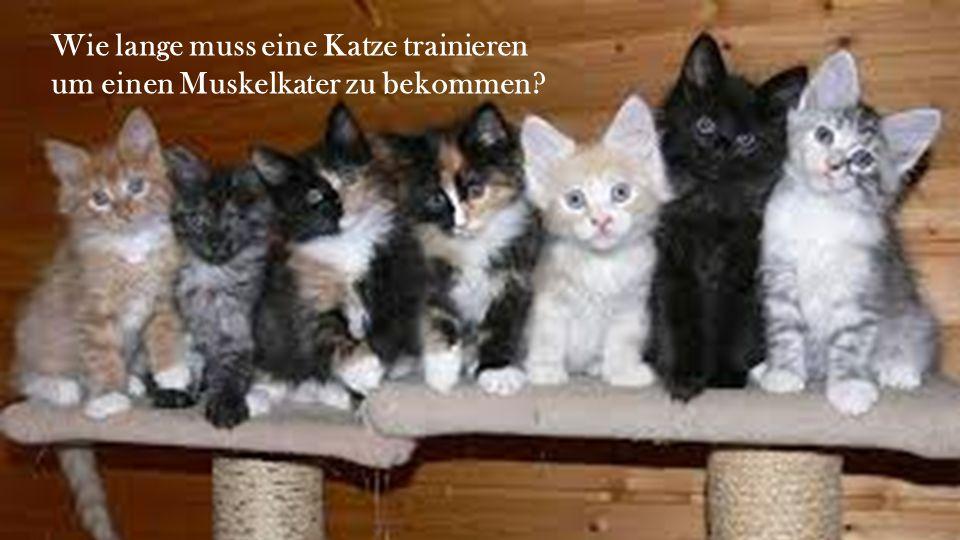Wie lange muss eine Katze trainieren