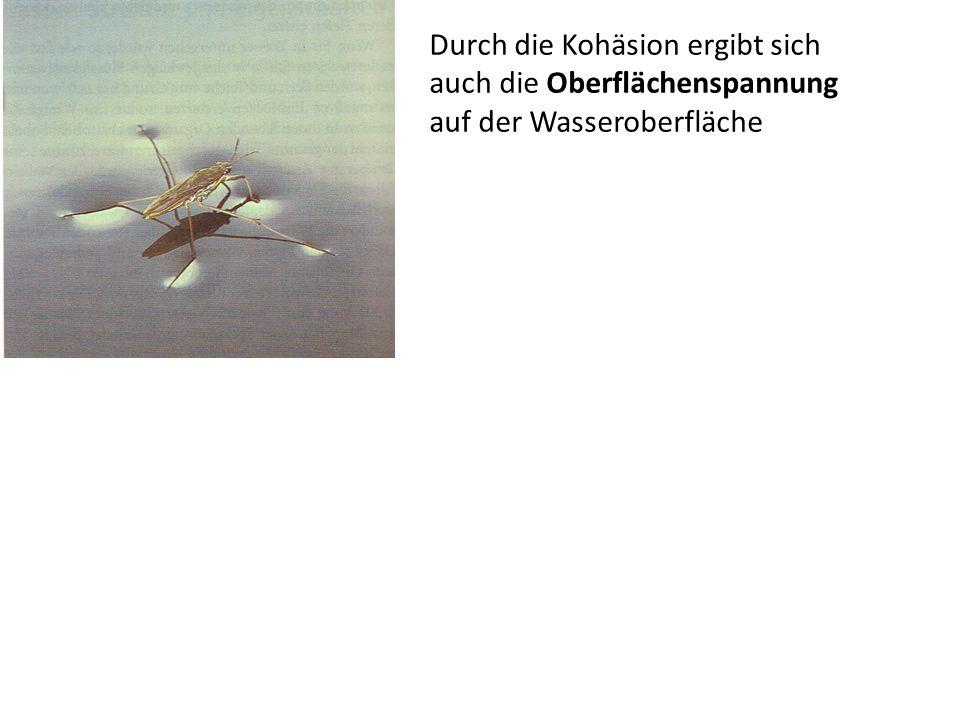 Durch die Kohäsion ergibt sich auch die Oberflächenspannung auf der Wasseroberfläche