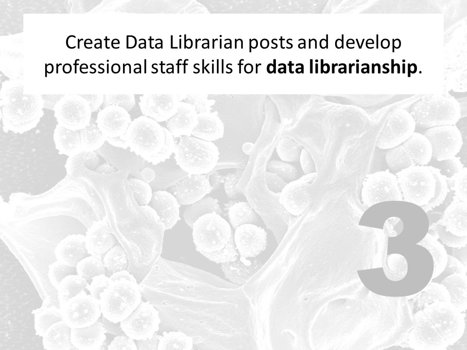 Create Data Librarian posts and develop professional staff skills for data librarianship.