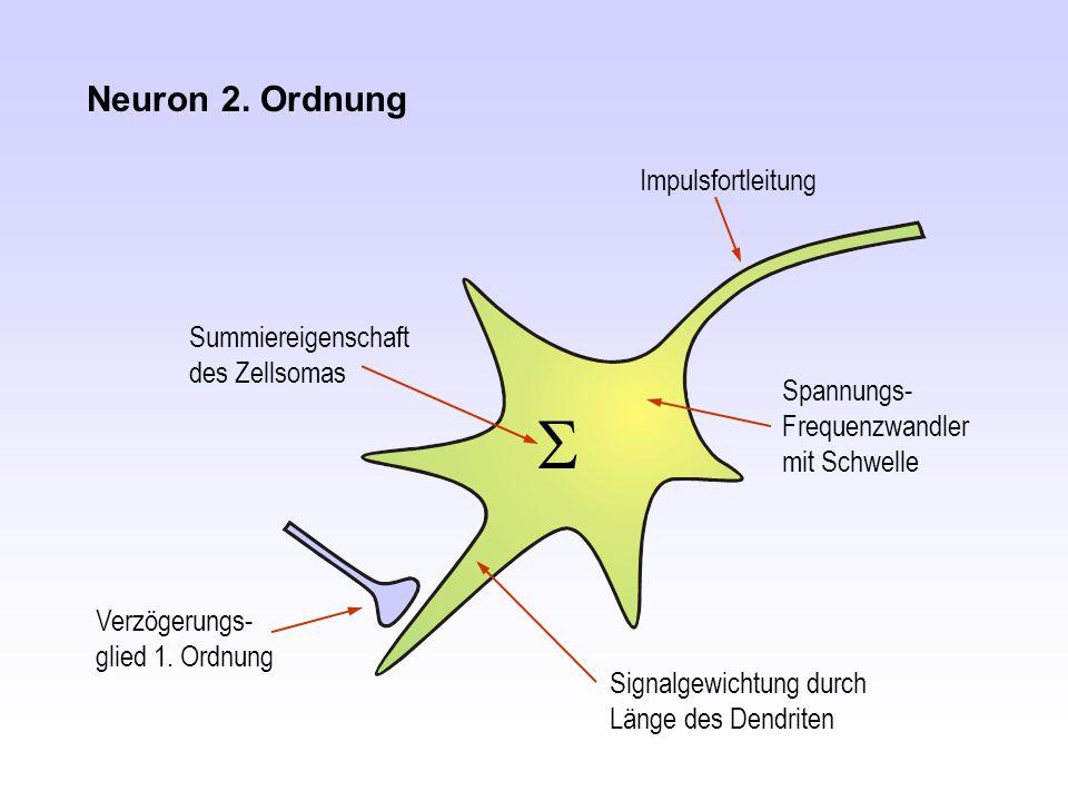 S Neuron 2. Ordnung Impulsfortleitung Summiereigenschaft des Zellsomas
