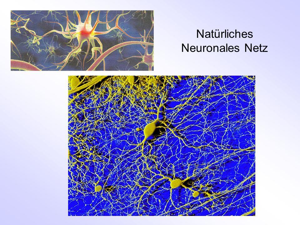 Natürliches Neuronales Netz