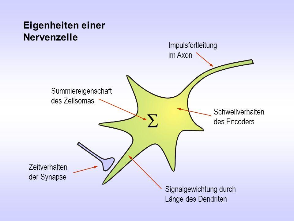 S Eigenheiten einer Nervenzelle Impulsfortleitung im Axon