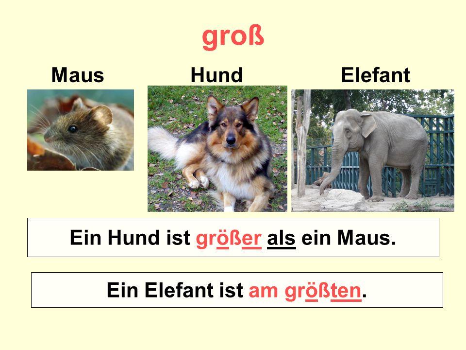 groß Maus Hund Elefant Wer ist größer – ein Maus oder ein Hund