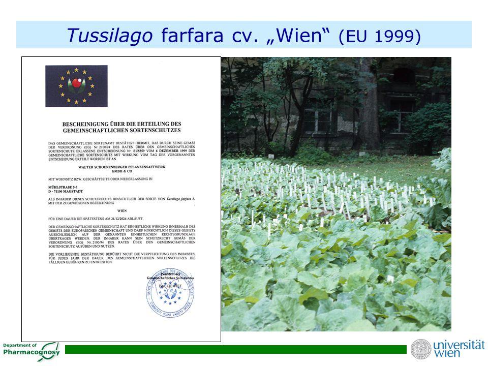 """Tussilago farfara cv. """"Wien (EU 1999)"""
