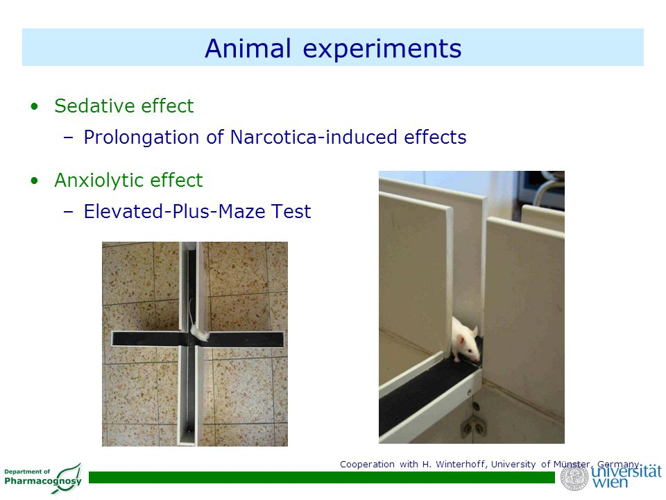 Animal experiments Sedative effect