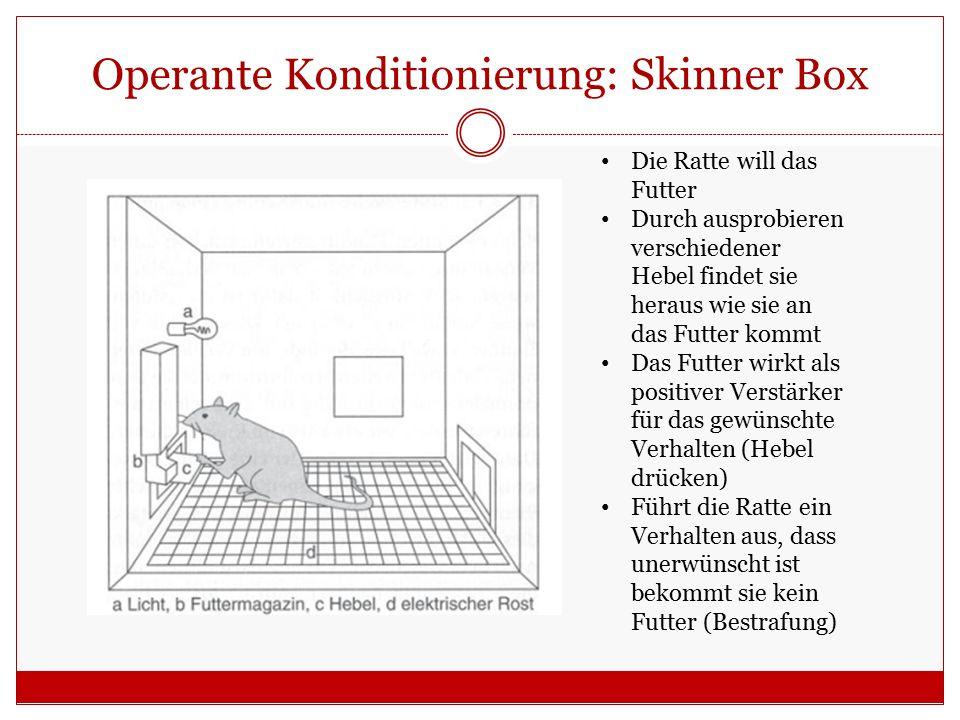 Operante Konditionierung: Skinner Box