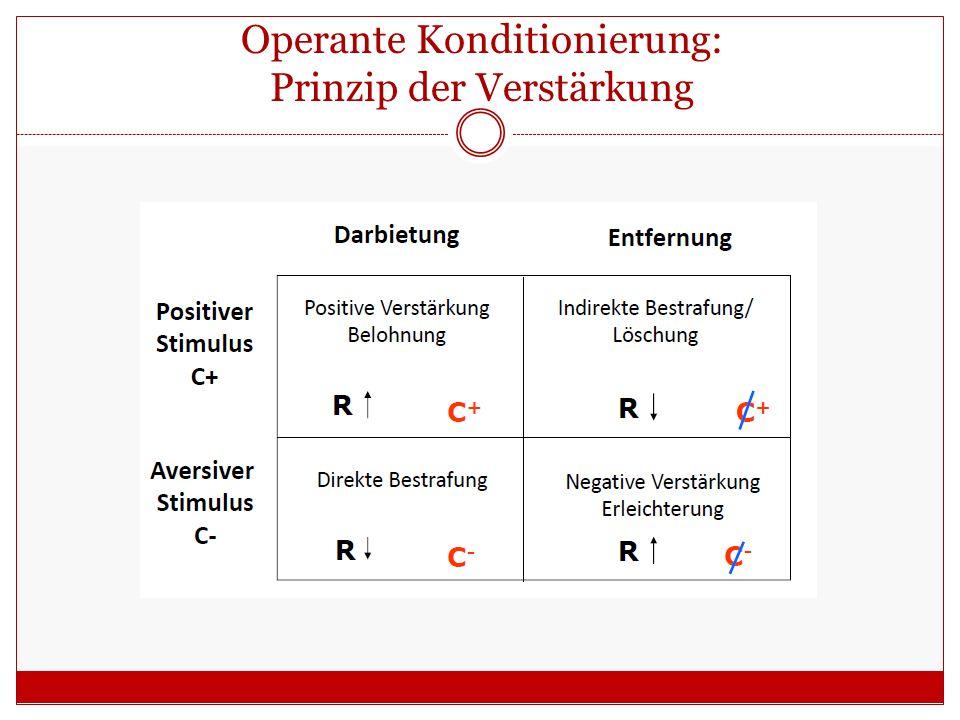 Operante Konditionierung: Prinzip der Verstärkung