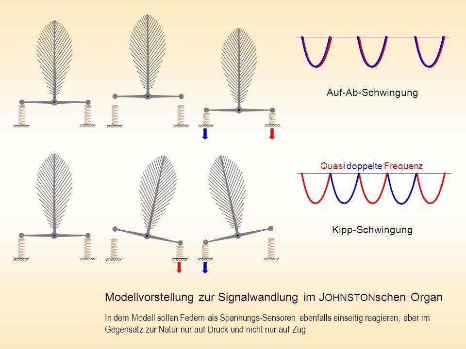 Modellvorstellung zur Signalwandlung im JOHNSTONschen Organ