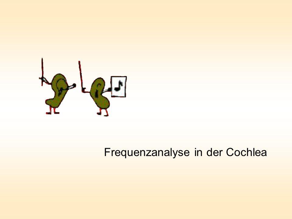 Frequenzanalyse in der Cochlea