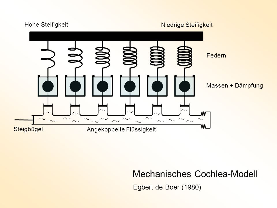 Mechanisches Cochlea-Modell