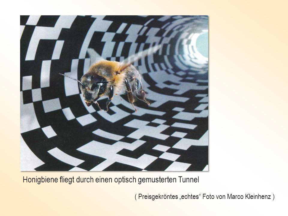 Honigbiene fliegt durch einen optisch gemusterten Tunnel