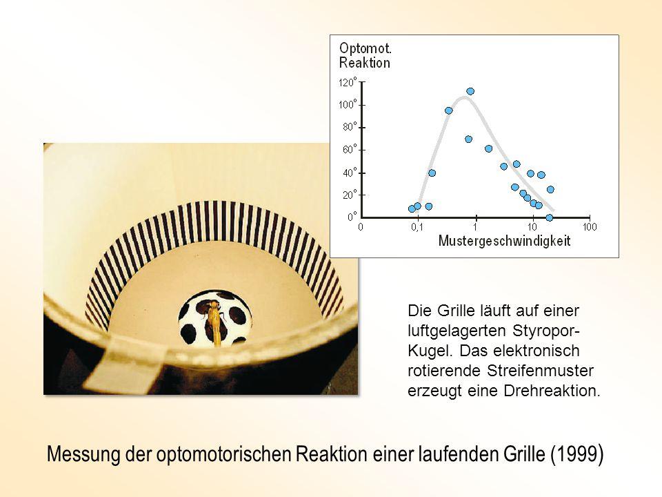 Messung der optomotorischen Reaktion einer laufenden Grille (1999)