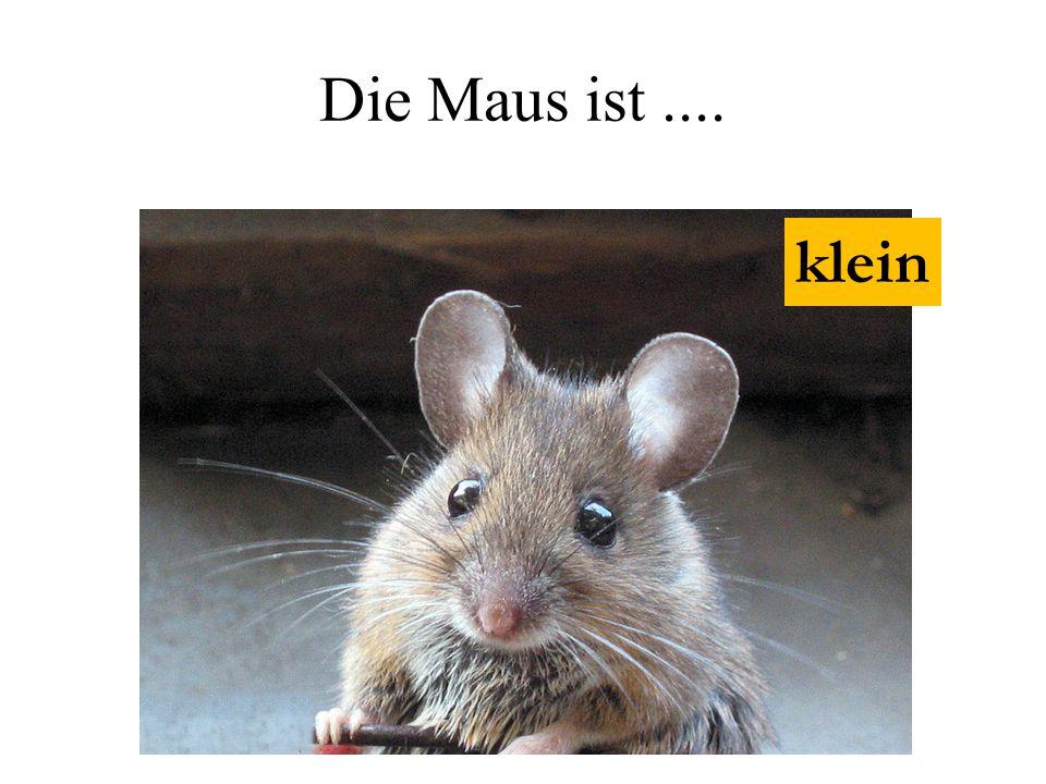 Die Maus ist .... klein