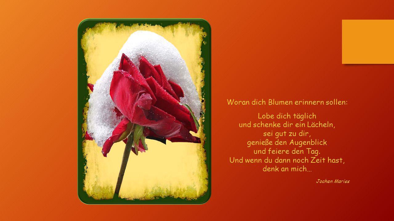 Woran dich Blumen erinnern sollen: Lobe dich täglich