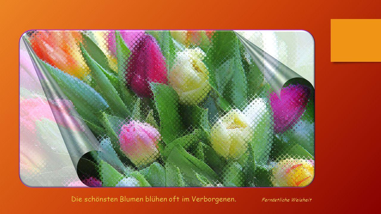 Die schönsten Blumen blühen oft im Verborgenen. Fernöstliche Weisheit
