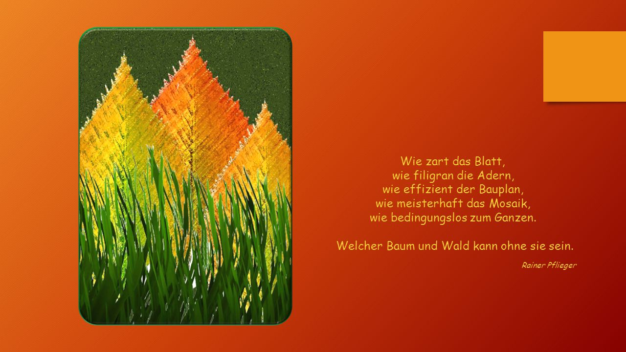Wie zart das Blatt, wie filigran die Adern, wie effizient der Bauplan, wie meisterhaft das Mosaik, wie bedingungslos zum Ganzen. Welcher Baum und Wald kann ohne sie sein.