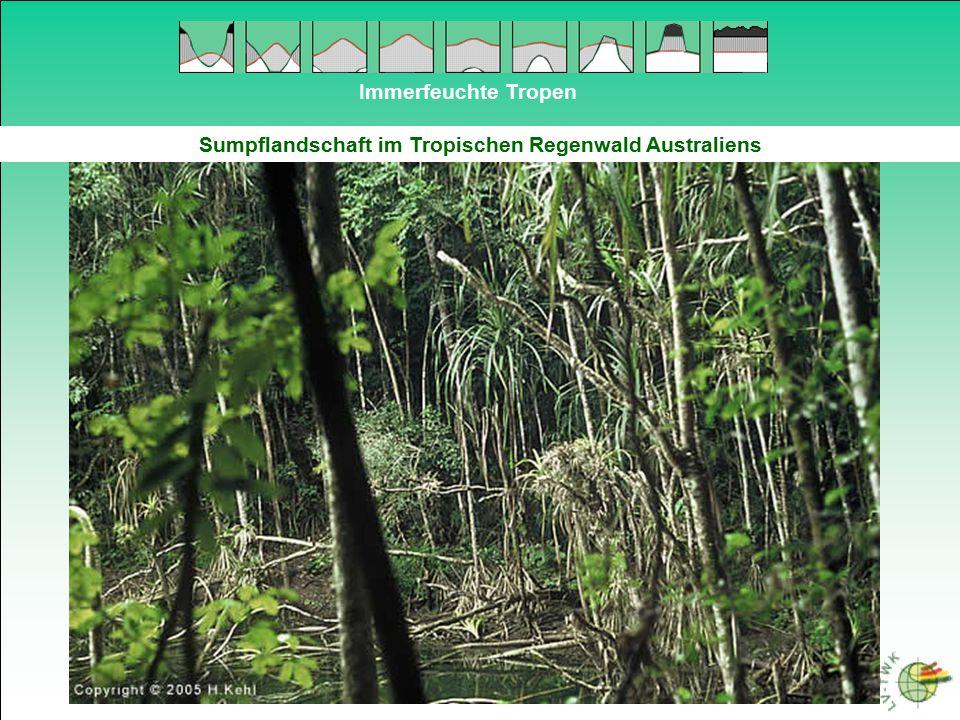 Sumpflandschaft im Tropischen Regenwald Australiens
