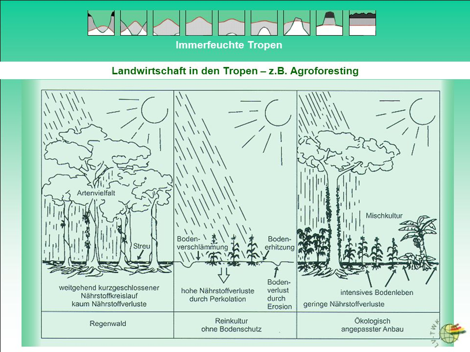 Landwirtschaft in den Tropen – z.B. Agroforesting