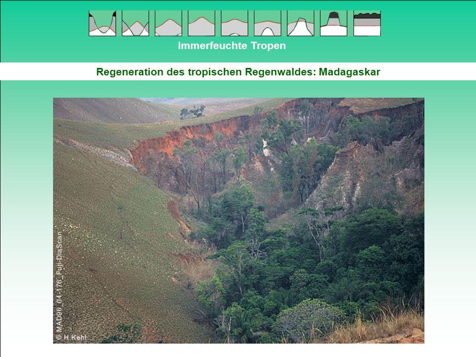 Regeneration des tropischen Regenwaldes: Madagaskar