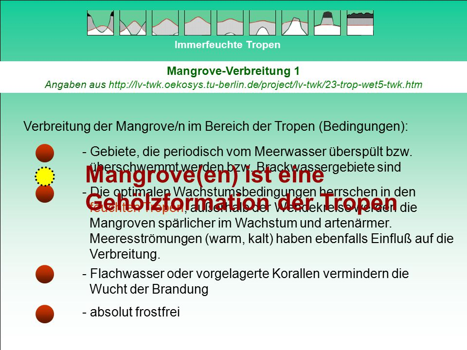 Mangrove(en) ist eine Gehölzformation der Tropen
