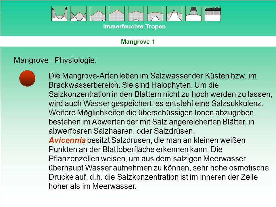Mangrove - Physiologie: