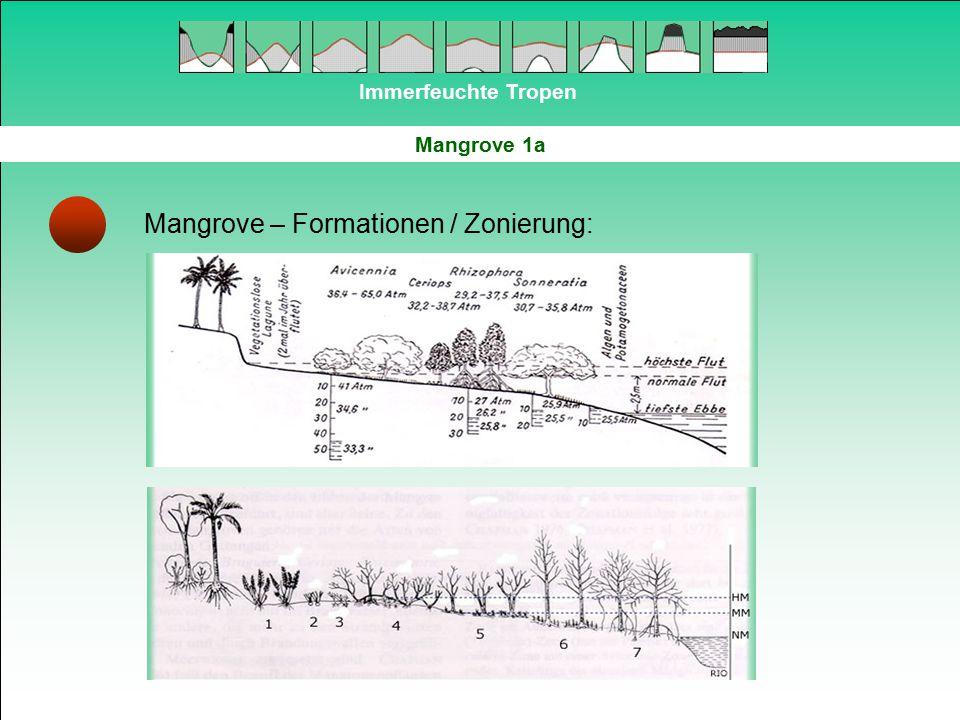 Mangrove – Formationen / Zonierung: