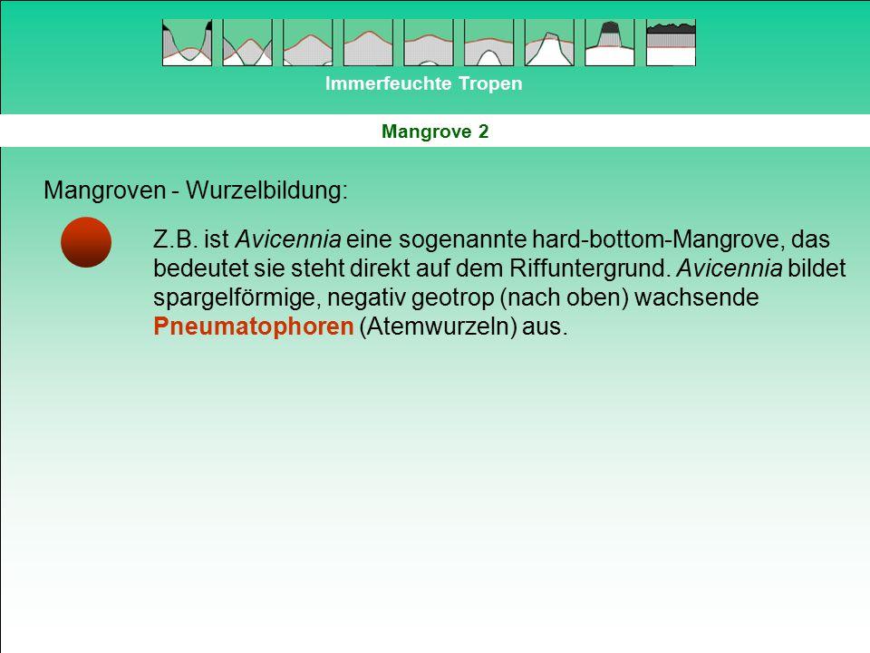 Mangroven - Wurzelbildung: