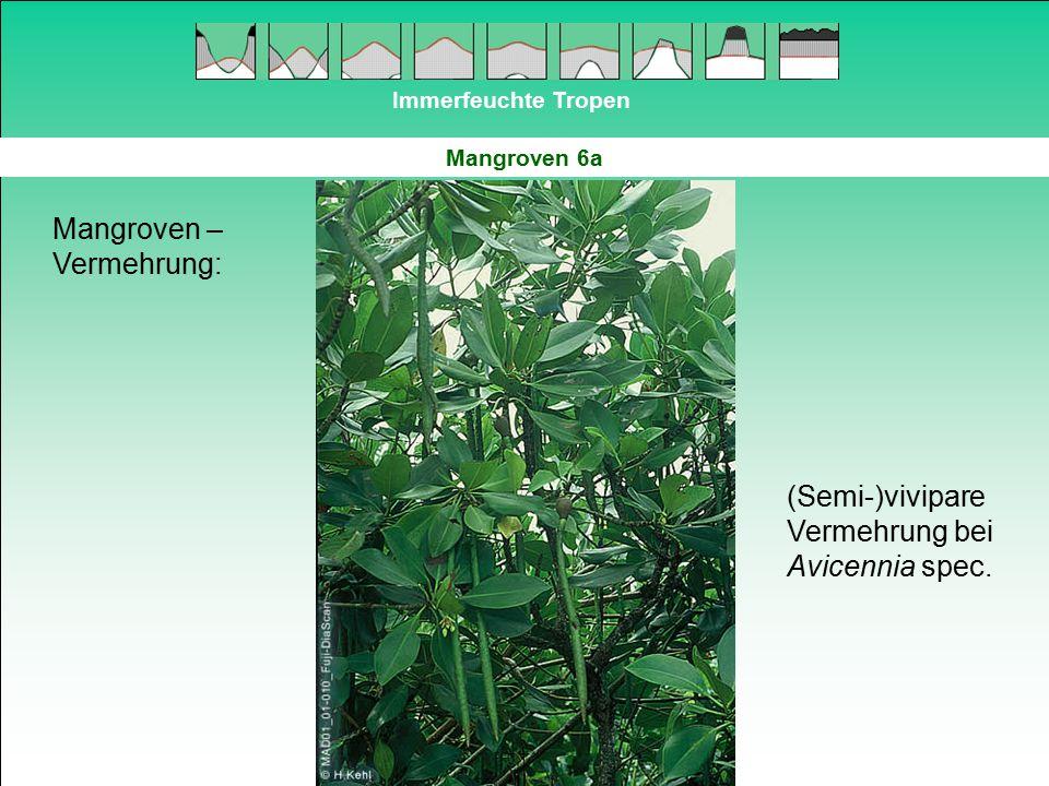 Mangroven – Vermehrung: