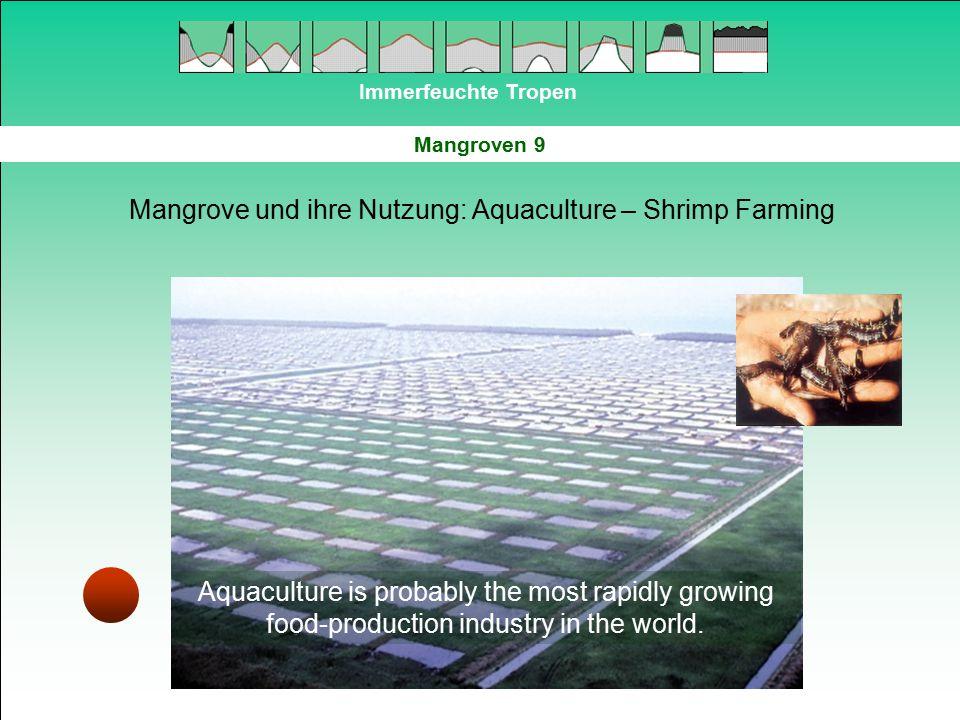 Mangrove und ihre Nutzung: Aquaculture – Shrimp Farming