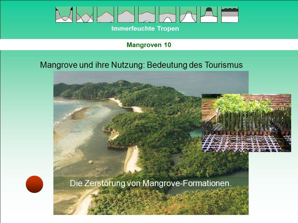 Die Zerstörung von Mangrove-Formationen.