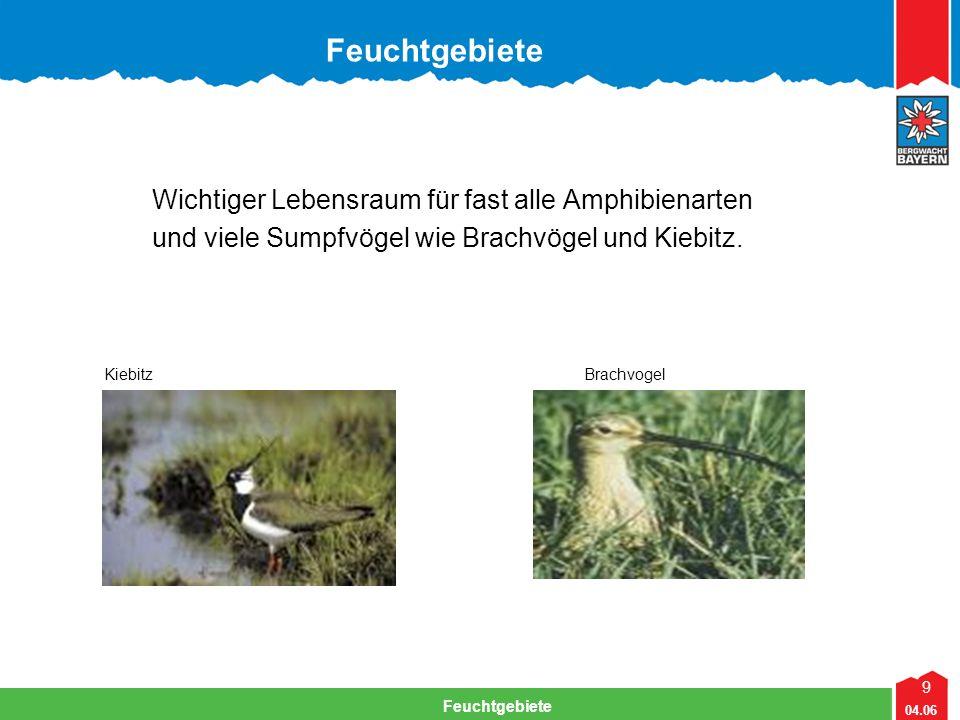 Feuchtgebiete Wichtiger Lebensraum für fast alle Amphibienarten
