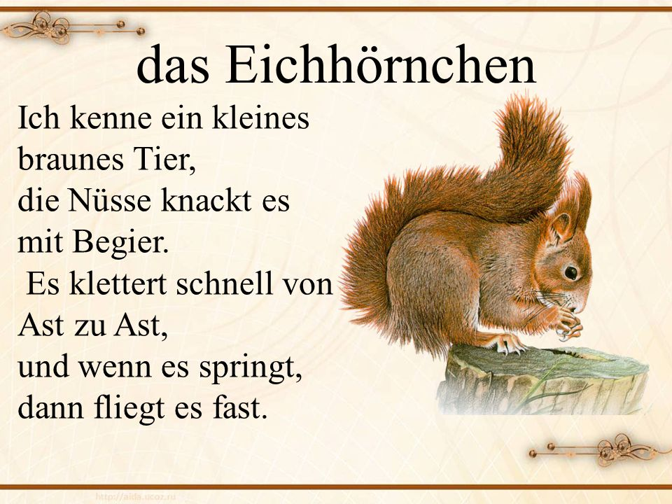 das Eichhörnchen Ich kenne ein kleines braunes Tier,
