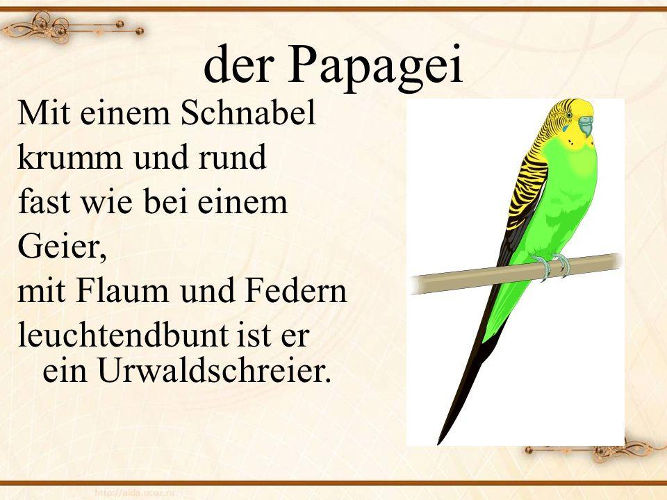 der Papagei Mit einem Schnabel krumm und rund fast wie bei einem