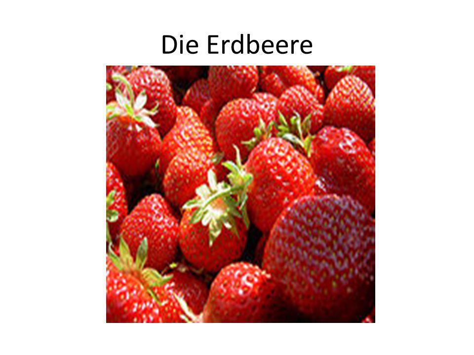 Die Erdbeere