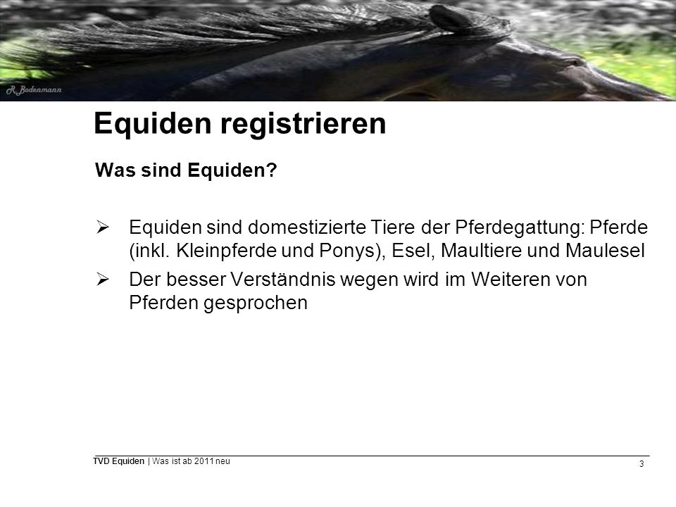 Equiden registrieren Was sind Equiden