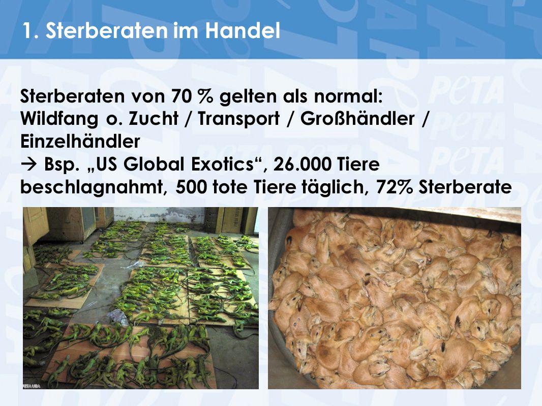 1. Sterberaten im Handel Sterberaten von 70 % gelten als normal: Wildfang o. Zucht / Transport / Großhändler / Einzelhändler.