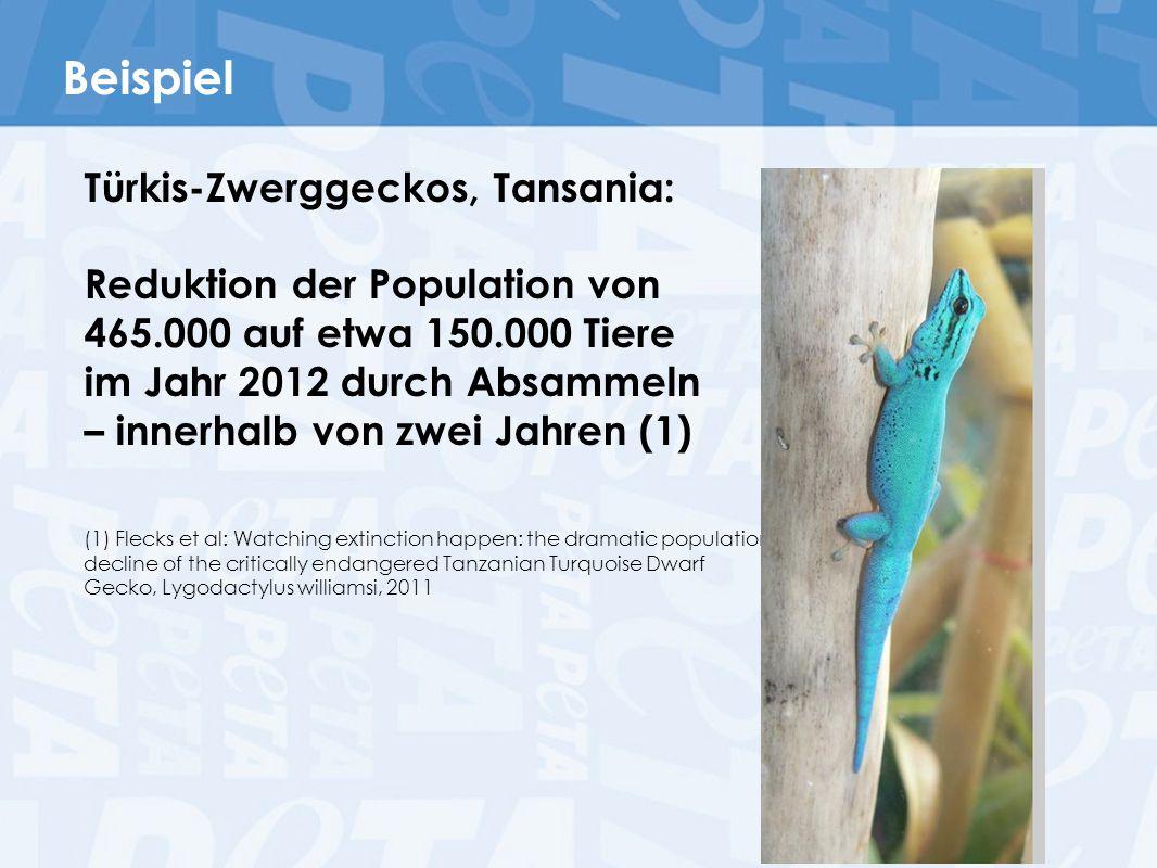 Beispiel Türkis-Zwerggeckos, Tansania: Reduktion der Population von