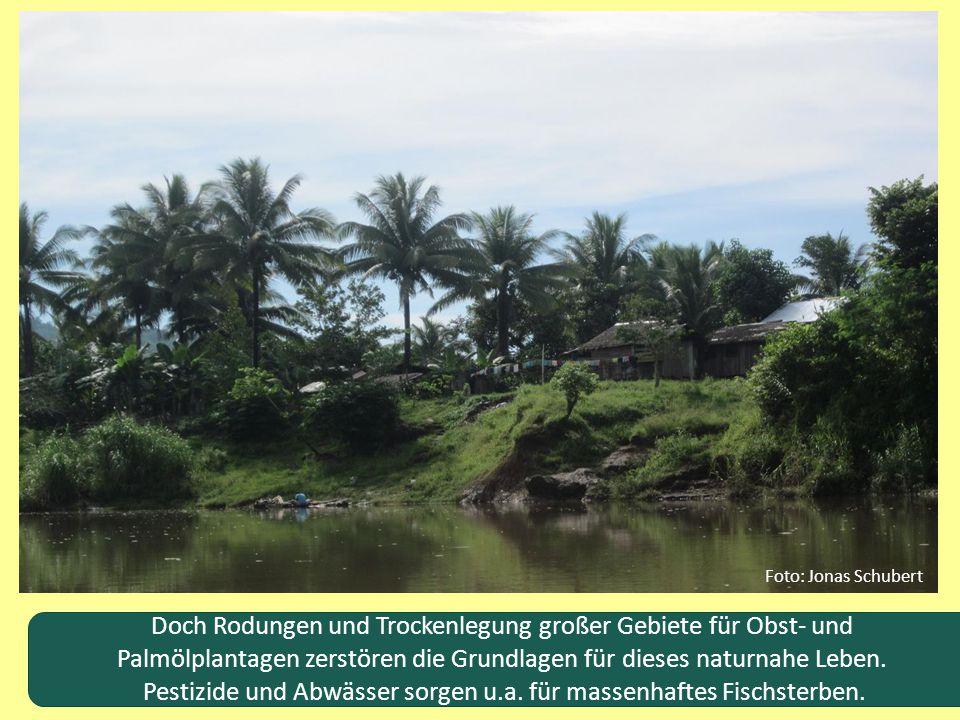 Pestizide und Abwässer sorgen u.a. für massenhaftes Fischsterben.