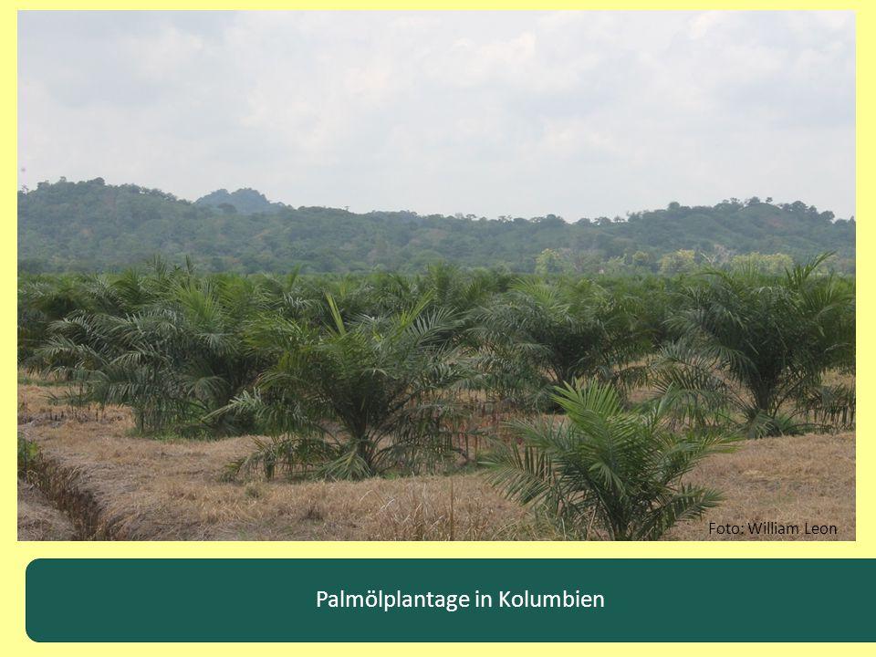 Palmölplantage in Kolumbien