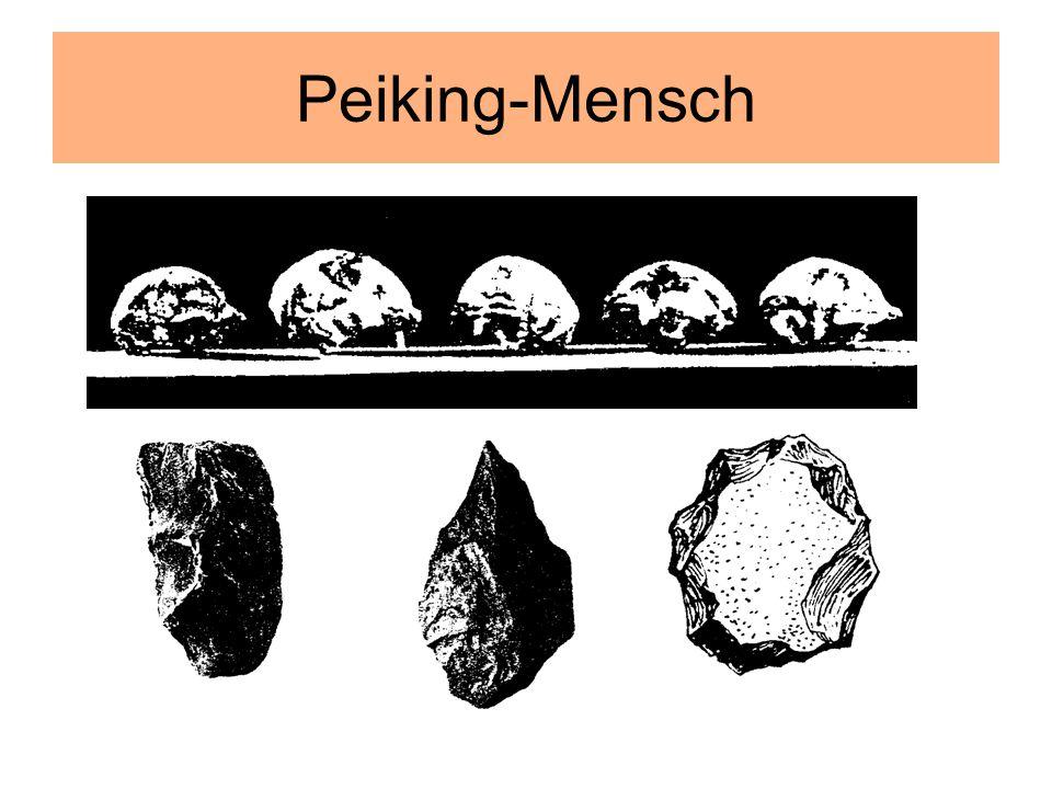 Peiking-Mensch