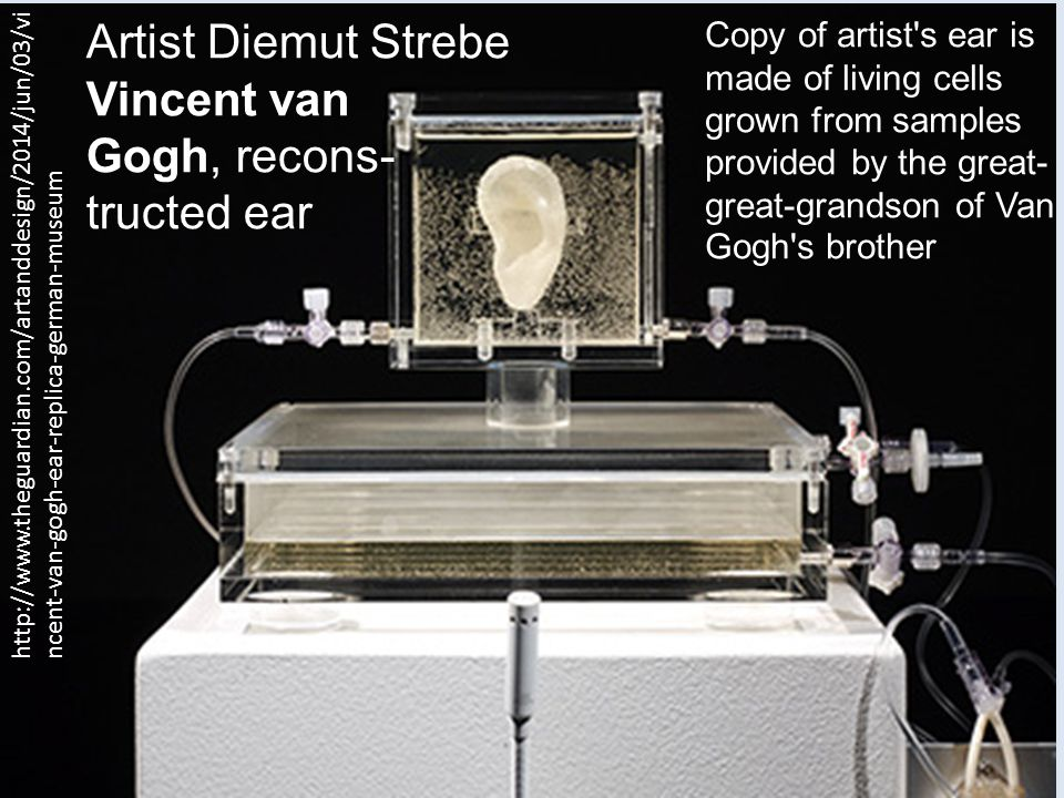 Artist Diemut Strebe Vincent van Gogh, recons- tructed ear