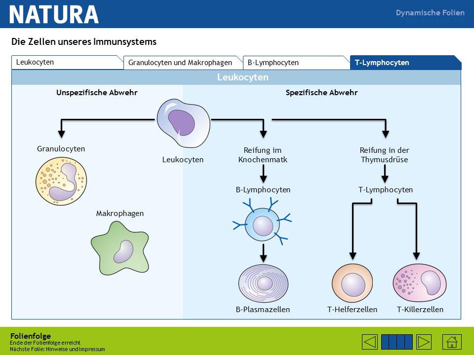 Die Zellen unseres Immunsystems