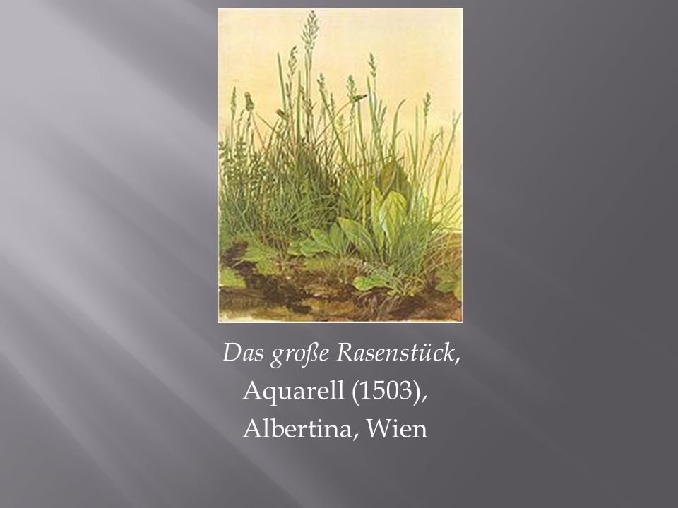 Das große Rasenstück, Aquarell (1503), Albertina, Wien