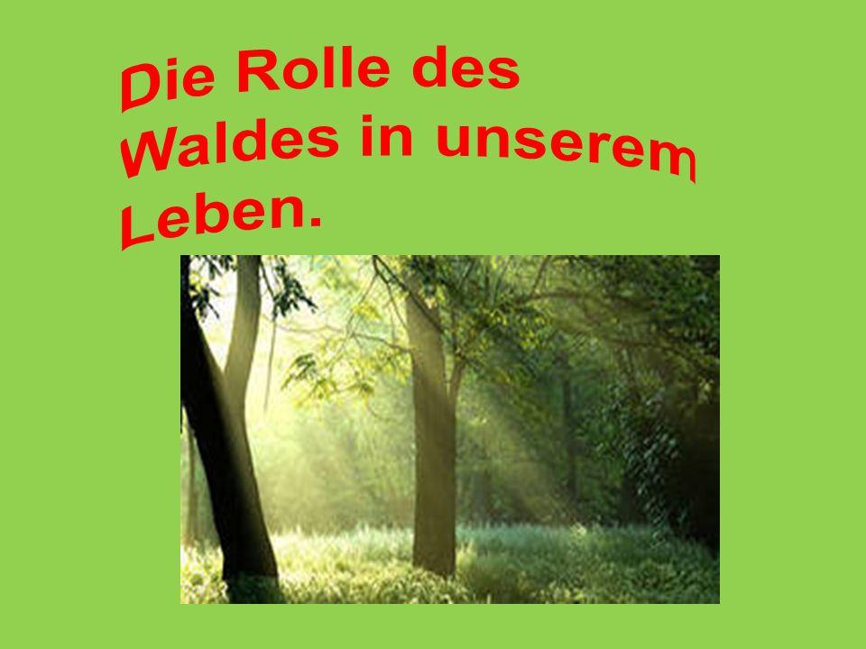 Die Rolle des Waldes in unserem Leben.