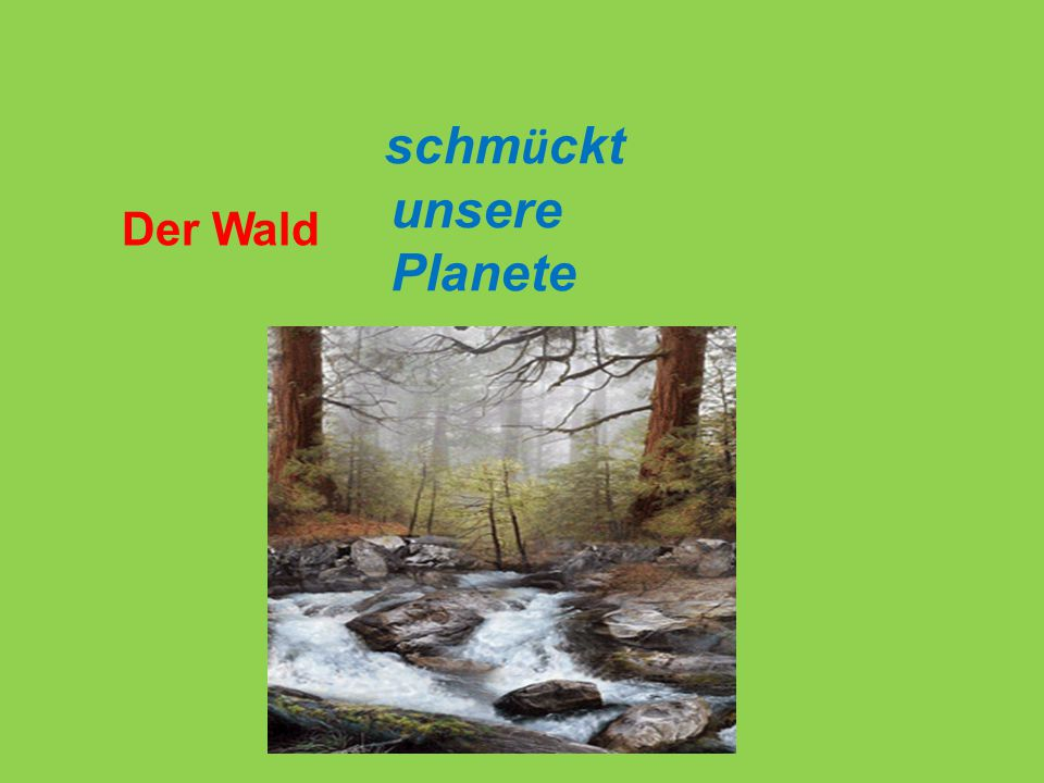 schmückt unsere Planete Der Wald