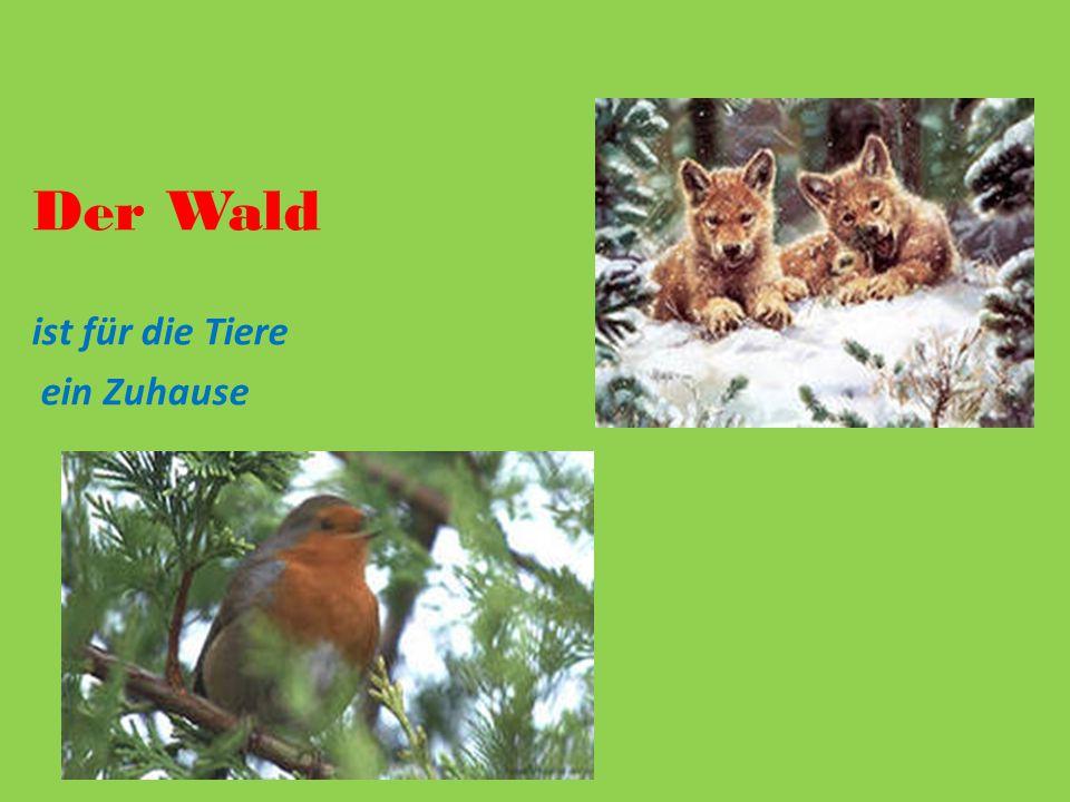 Der Wald ist für die Tiere ein Zuhause